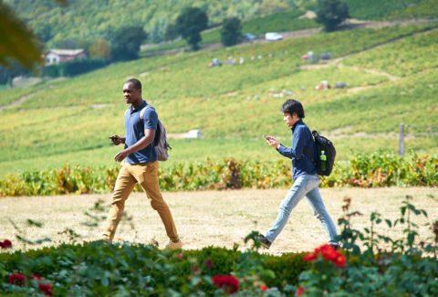 Team building Chasse au trésor dans le Beaujolais Mystère de la Vigne